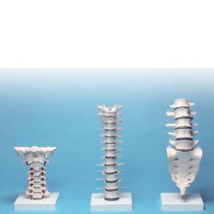 Hals-Brust-Lendensäule, Stolzenberg GmbH